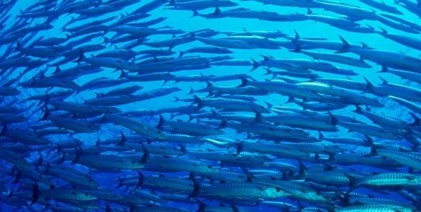 20 chefs apoyan la conservación de la biodivesidad de los océanos