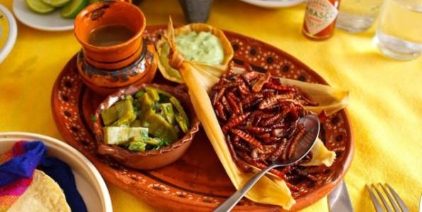 Expertos piden más investigación sobre insectos comestibles