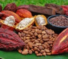 Crece el interés por el cacao nativo