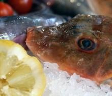 Slow Food pone el foco en los recursos del mar