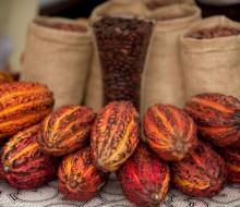 Cacao, quinua, castañas y maca lo más demandado del Perú