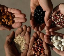 La FAO premia a estudiantes Latinoamericanos