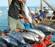 Más pesca internacional en 2014